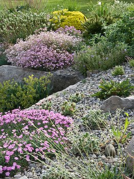 alpines for beginners