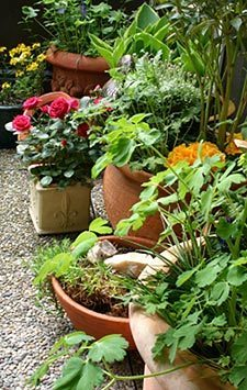 Balcony And Roof Gardening Tips