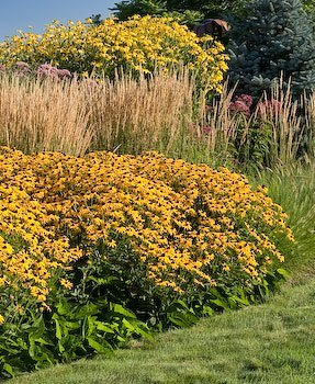 Big bold perennials autumn sun coneflower or cut leaf cone flower rudbeckia nitida herbstsonne mightylinksfo
