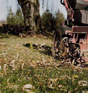 cleaning up fall leaves by mowing