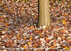 cleaning up fall leaves - leaves on ground