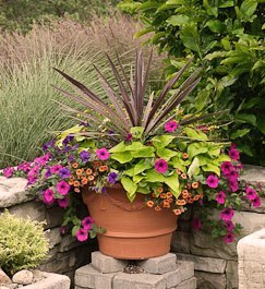 Container garden tips for Container gardening