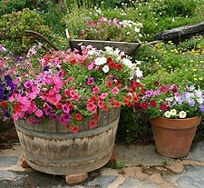 Container gardening creativity