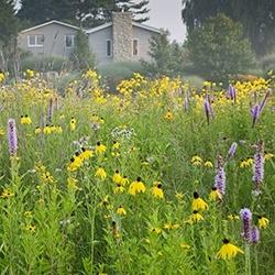 wild flower prairie