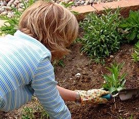 Perennial garden care