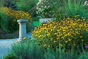 early fall garden guide