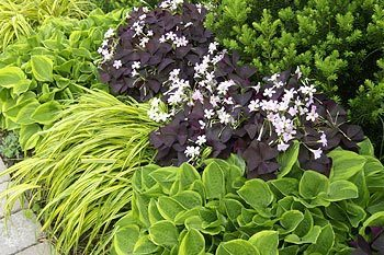Attractive Companions For Your Hostas