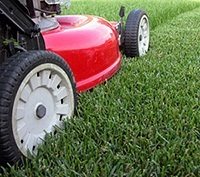 Low maintenance lawn care