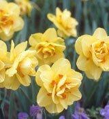 mid-spring garden flower