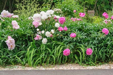 Flower Garden Design flower garden design ideas Flower Garden Design