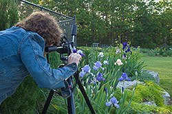 take better garden pictures