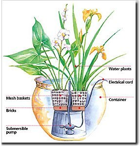 container garden with pond plants - Water Garden Plants