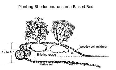 Terrific Growing Rhododendrons And Azaleas With Lovely Growing Rhododendrons  With Endearing Wood Garden Arch Also Green Gardening In Addition Cast Aluminium Garden Furniture And High Lea Garden Centre As Well As Buy Large Garden Pots Additionally Winter Garden Heritage Foundation From Flowergardeningmadeeasycom With   Lovely Growing Rhododendrons And Azaleas With Endearing Growing Rhododendrons  And Terrific Wood Garden Arch Also Green Gardening In Addition Cast Aluminium Garden Furniture From Flowergardeningmadeeasycom