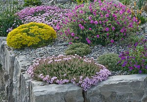 Rock gardening tips for small spaces