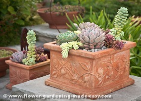 Succulents In Containers Stylish And Easy Potscaping