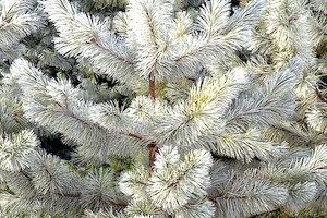 winter care of trees and shrubs